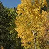Seeing Fall on the Seven Bridges Trail