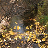 Colors of fall along the creek