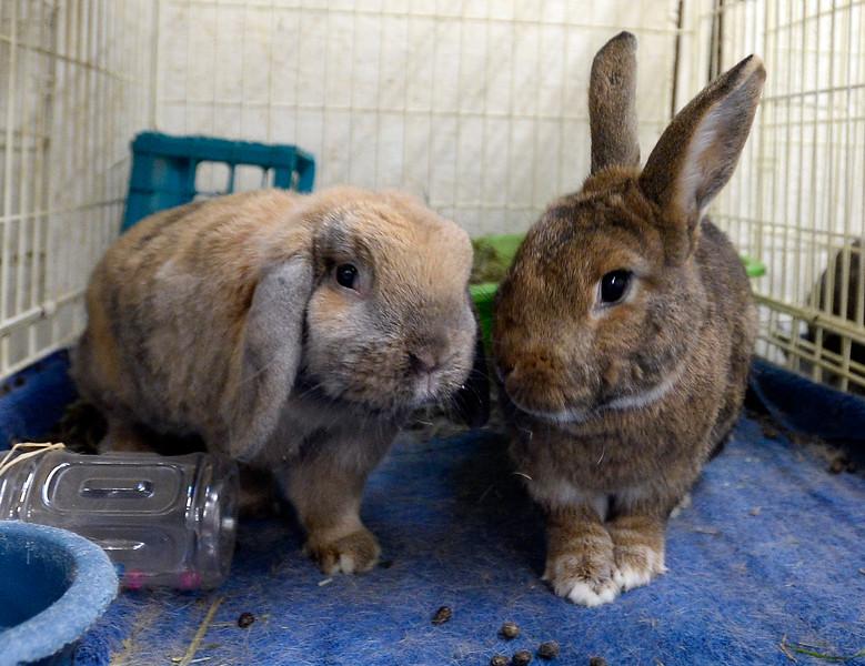 Rabbits_CG39260