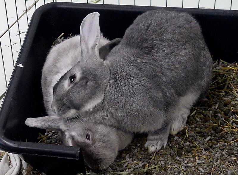 Rabbits_CG39650