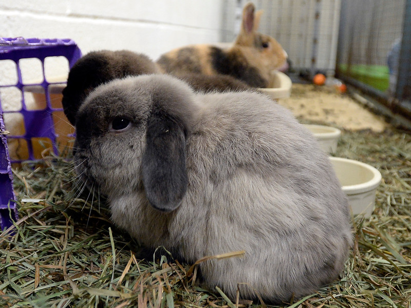 Rabbits_CG39368