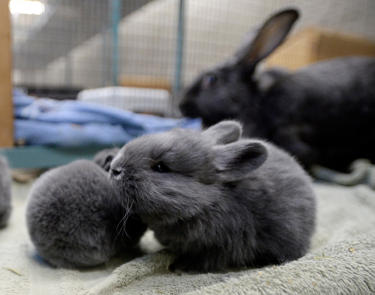 Rabbits_CG39082