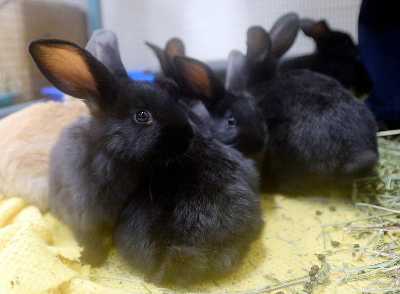 Rabbits_CG38827