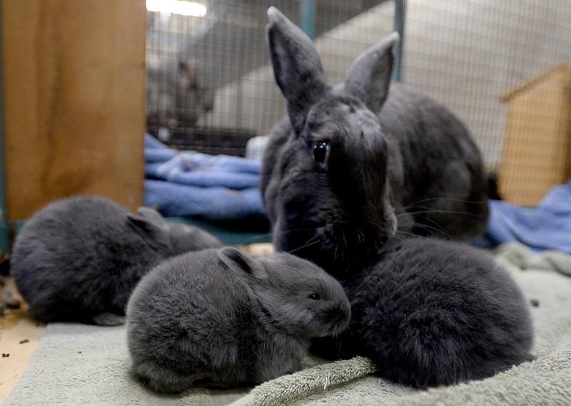 Rabbits_CG39048