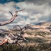 Along the Continental Divide Trail, near James Peak, Colorado