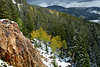 Colorado Gold Aspen trees and a few fallen Aspen leafs.<br /> Rollins Pass Colorado.<br /> Daniel P Woods