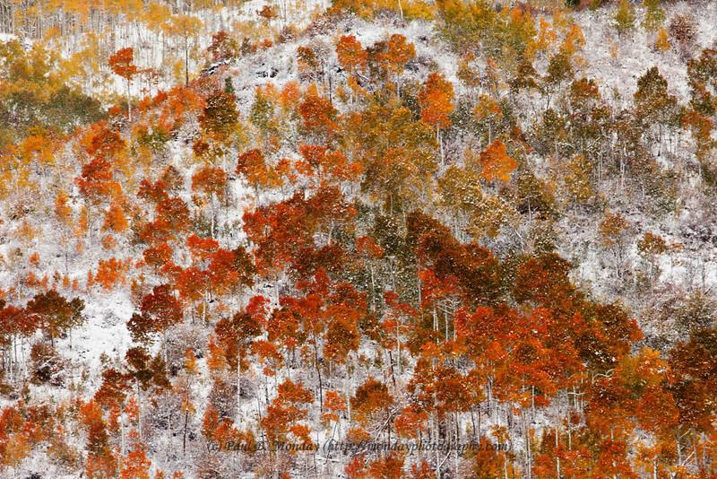 An Autumn Abstract