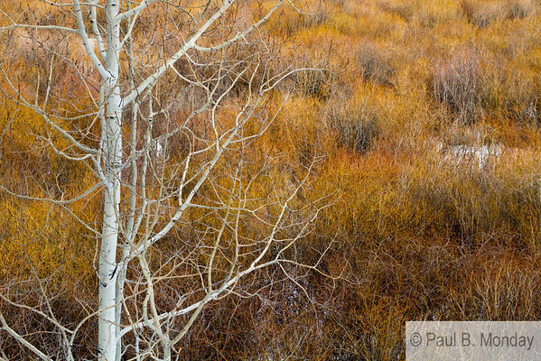 This is my second favorite of my series, simply because the aspen blends with the willows and seems to get tangled away...