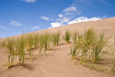 The grasses on the Great Sand Dunes