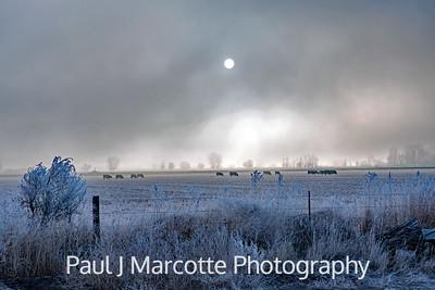 Field of frost