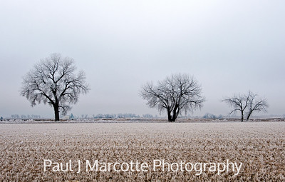 3 Frosty trees