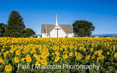 Sunflower church