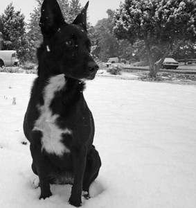 _bella_snow