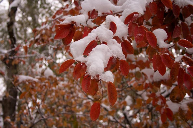 2009-10-29 October Snow Storm 17