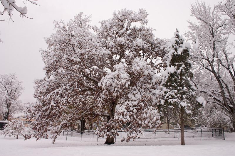 2009-10-29 October Snow Storm 23