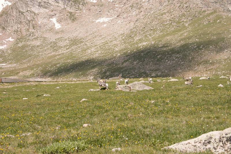 2009-8-1 Camping  021