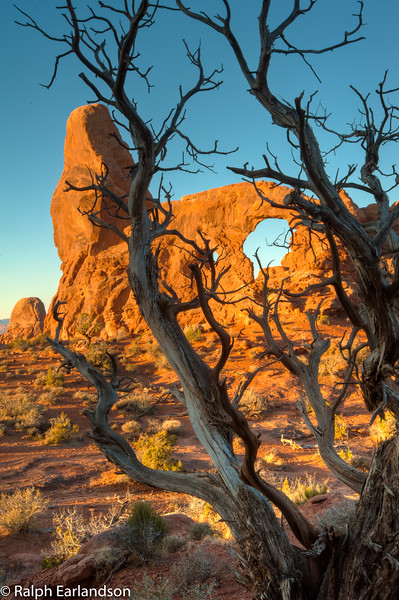 Turret Arch at sunrise framed by a juniper.