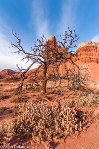 A tree stands guard in front of Chimney Rock.