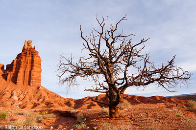 A bare tree acts as a sentinel near Chimney Rock at sunset.