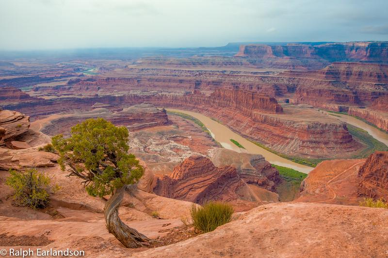 A juniper tree and a gooseneck of the Colorado River.
