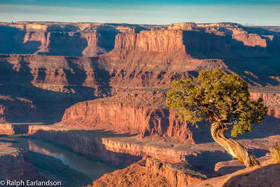 A juniper tree on the canyon overlook.