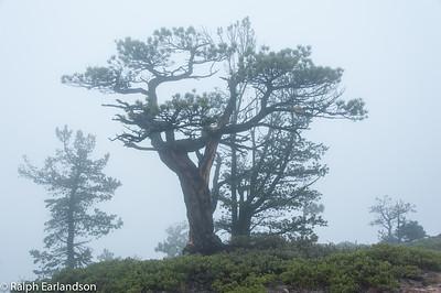 Morning fog on Hell's Backbone.