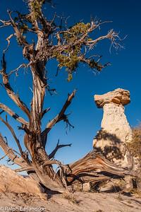 A juniper tree frames a hoodoo.