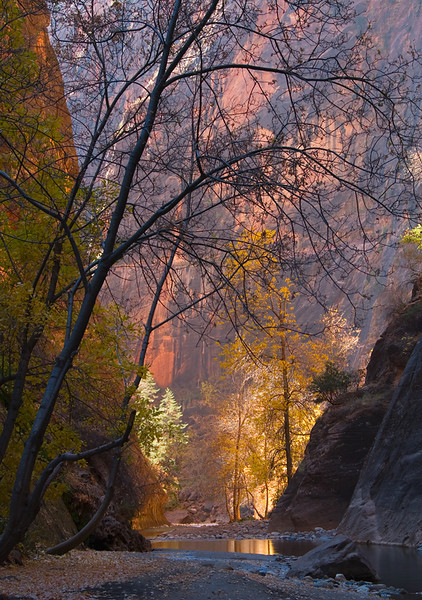 Zion Narrows I