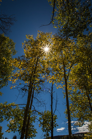 Aspen Sunburst, Colorado