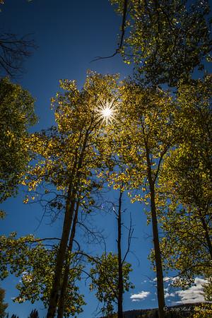 Aspen Sunburst, Colorado