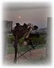 Saddle Sunset