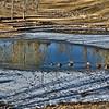 taken on a warm January walk in nearby Kyer Park; 1/14/17