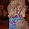 02/2007 Harmony modeling my scarf