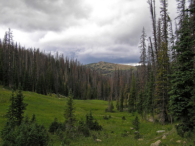 This is looking towards Buffalo Pass (or, something like that).  The trail we were on intersects with another trail that heads over that far ridge.