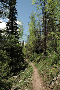 The trail meanders along the side of the valley above South Fork Big Creek.  Very nice trail.  It starts to gain a little in altitude, but nothing extreme.  As can be seen, the aspens were just leafing out.  That emerald green time of year.