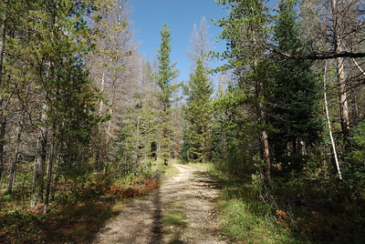 "First part of the ""trail"" follows an old road.  This is after you go past the parking area for hunters and others looking for access into the wilderness area."
