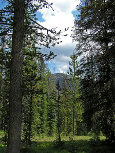 Anyway, I continued on along the trail for another 1/2 to 1 mile.  Looking for my turnoff to hike up Davis Peak.  Finally went far enough that I knew I had missed it.  So, before I got too far down into the next valley, I headed back.  On the way back took a photo of what I am pretty sure is Davis Peak.