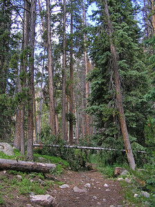 "And stays that way for at least a couple of miles.  In fact, I never really hit any ""steep"" sections (much less any switchbacks) compared to most of the trails I walk on.  Even though it was the middle of July, there were still some trees down over the trail."