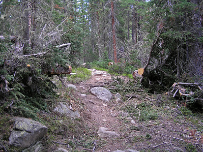 We saw (and climbed over) a lot of downed trees along the trail.  Looks like a forest crew has been by to do a little trail clearing.  They must have been pretty selective about which trees to cut (or, a bunch more fell down after they cut these).