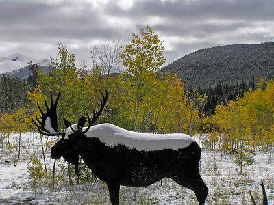"The ""moose"" at the state forest headquarters."