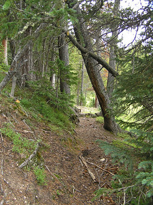 "I decided to stay on this side.  Turned out to be an ok decision, but crossing to the other side probably would have worked out fine also.  In fact, if you start hiking up Corral Creek by stopping on the road close to that cabin's driveway, it would make sense to stay on the other side. As I thought, I had to do a little bushwhacking to skip some areas along the creek that looked too wet.  I crossed over a little ridge which let me enjoy true ""woods hiking.""  Did find some pretty nice game trails to follow and, in general (mostly), was never out of sight of Corral Creek."