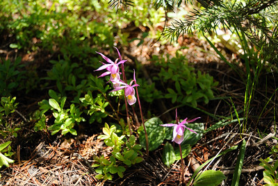 There in a shaded spot I found these little delicate flowers.  Waiting just for me, I'm sure.