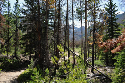 You can see the stream through the trees as the trail meanders through the forest.  And then, you see the next section of meadows ahead.
