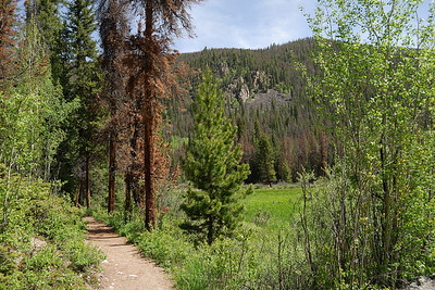 The trail winds around this first section of marshy meadows and then heads back up through the trees for a while.