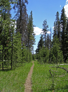 No picture of the log, but this is the trail right after crossing.  Very nice.  Oh, did I mention NO insects (flies, mosquitoes, etc.)?  Well, not sure why (still early in the season?), but there were no insects to speak of.  And, no people.  And, as can be seen, pretty nice weather.  Yes, very lovely hike : )