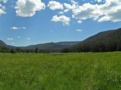 It didn't take too long before I realized that the trail was leading me right into a very large meadow/park.