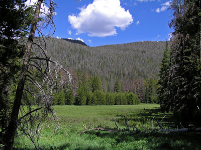 The trail entered the forest, but you could still see patches of meadow through the trees.
