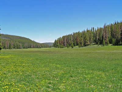 Looking the other way.  Yes, quite a nice sized meadow : )
