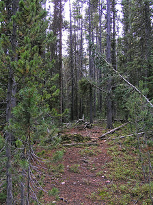 """After a while the trail got pretty """"weak"""", to say the least."""