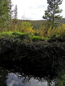 Tried to get this beaver dam to look as imposing as possible : )
